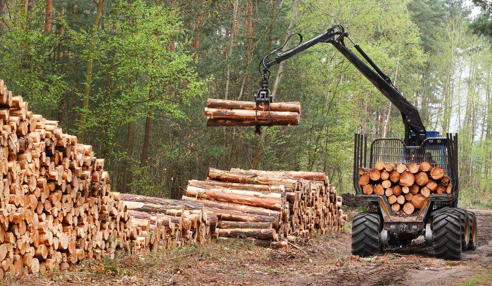 Für den Abtransport der geschlagenen Baumstämme steht ebenfalls Spezialgerät zur Verfügung.. (Bild: Kletr / Shutterstock.com)