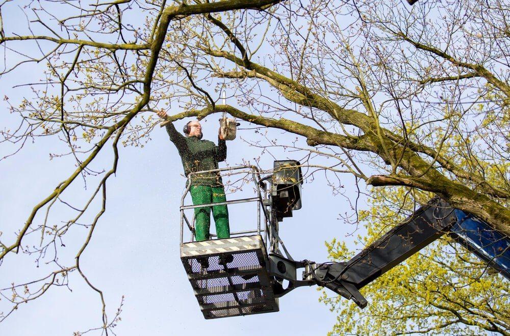 Gibt es ausreichend sicheren Standplatz beim Baum, können die Baumprofis mit Hubarbeitsbühnen anrücken.  (Bild: © Rob van Esch - shutterstock.com)