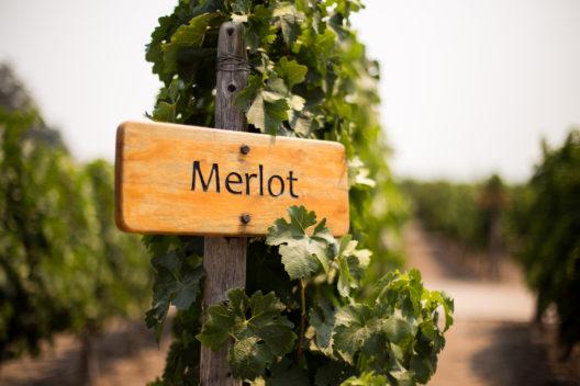 Einen erstklassigen Merlot auf dem Betriebsausflug geniessen (Bild: Mikeybbaker - shutterstock.com)